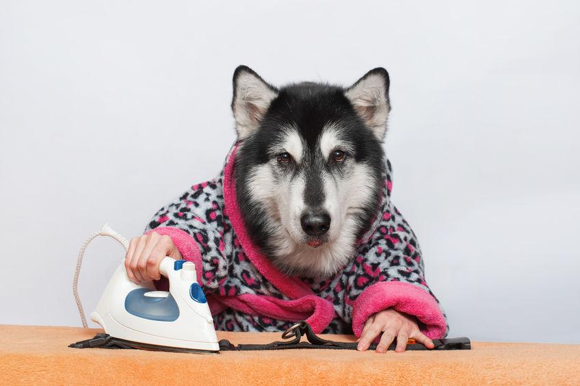 Ferro da stiro acquisto risparmio cane