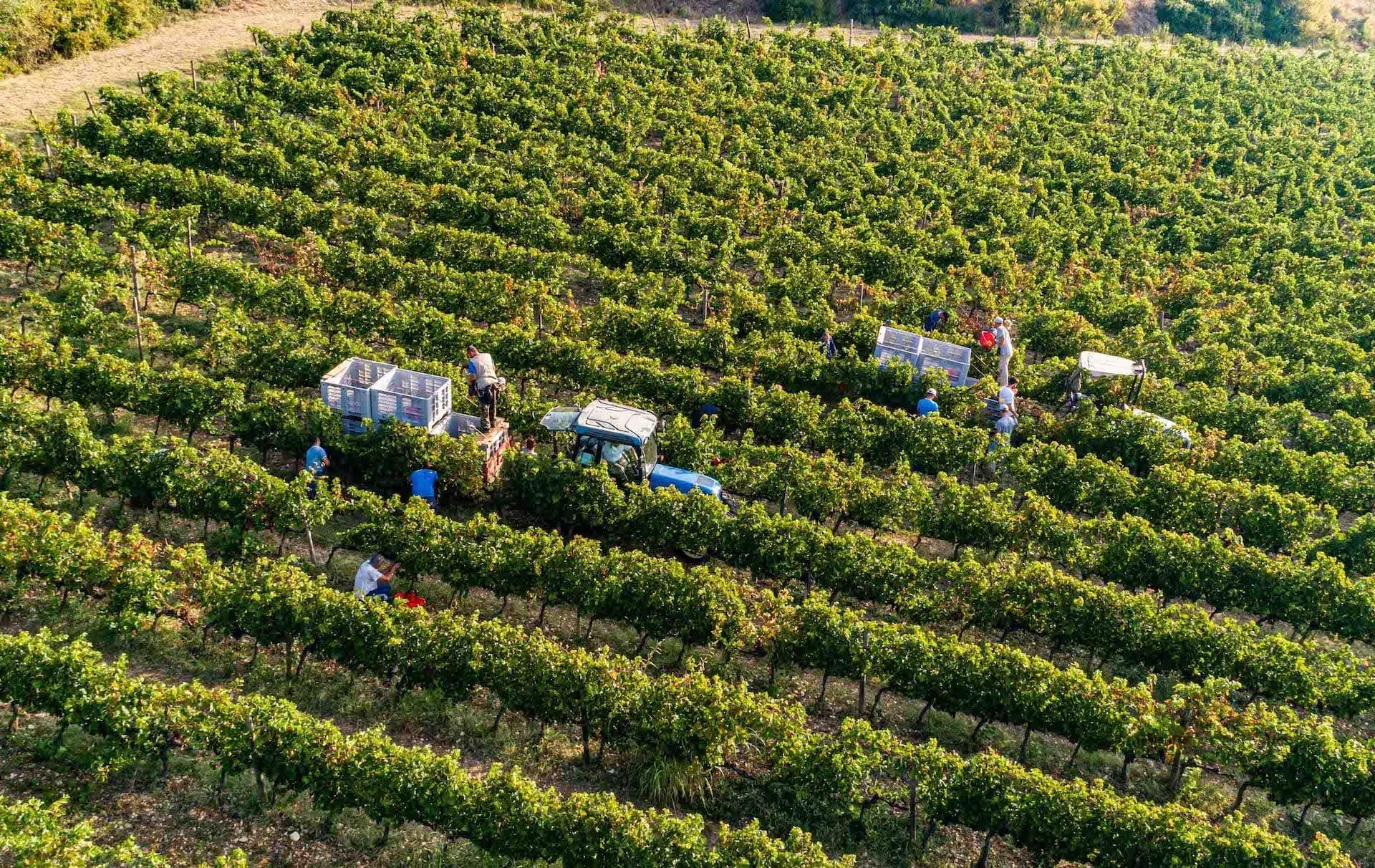 https://s3-eu-central-1.amazonaws.com/principecorsini/wp-content/uploads/2020/02/07165648/Fico-Wine-Principe-Corsini-18.jpg