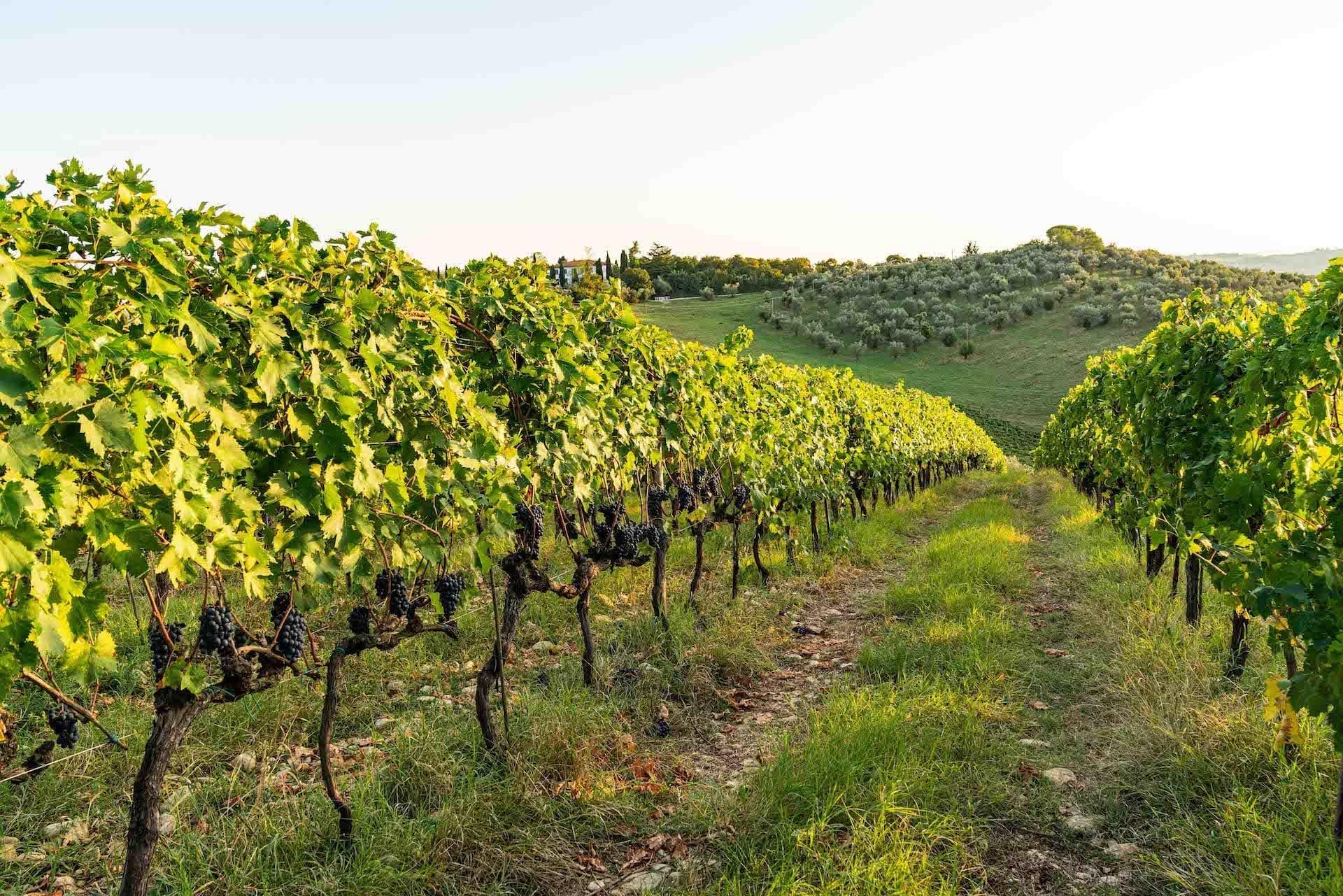 https://s3-eu-central-1.amazonaws.com/principecorsini/wp-content/uploads/2020/02/07165717/Fico-Wine-Principe-Corsini-15.jpg