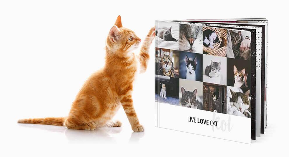 Album ze zdjęciami kotów