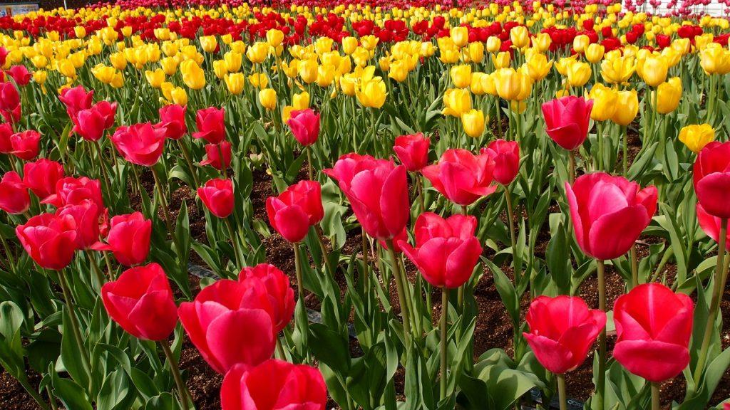 Blumenfelder; ALDI SÜD; ALDI Blumen