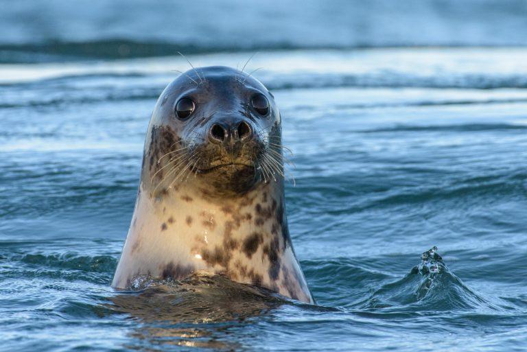 Dol op zeehonden en tuimelaars? Kom dan naar de Zeezoogdierdagen