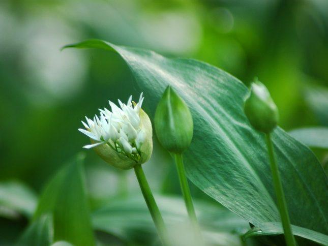 plantenweetjes