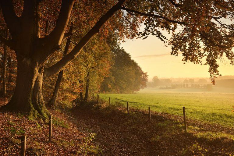 Roots-route: wandelen over de bergen rond Lochem