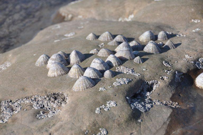 Wat een vraag: wat zijn deze 'hoedjes' op de stenen?