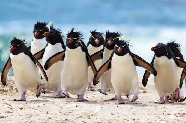 De leukste weetjes over pinguïns