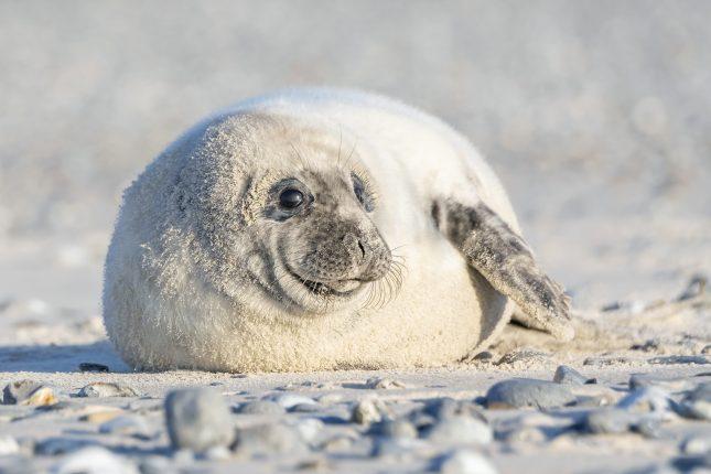 zeehondenportret