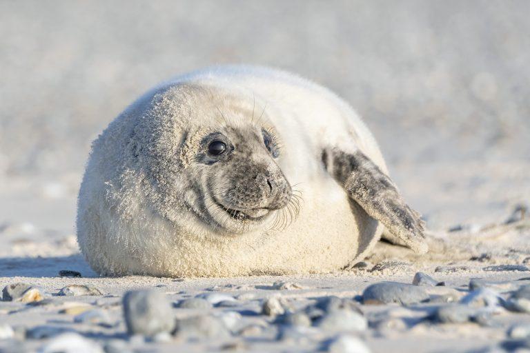 Schitterend zeehondenportret