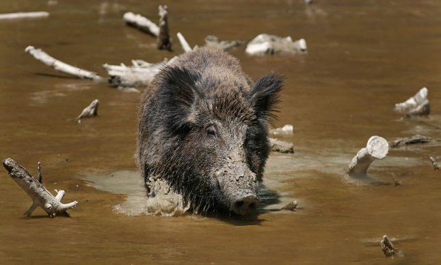 top 10 gevaarlijkste dieren