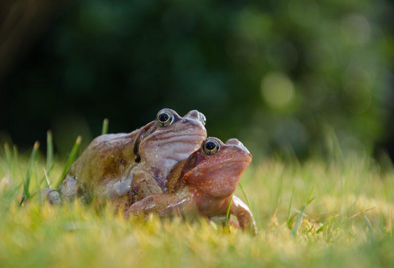 Lezing over reptielen en amfibieën én de paddentrek!