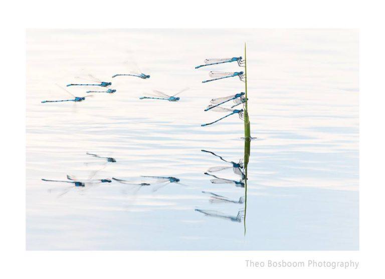 Officiële presentatie nieuw fotoboek Theo Bosboom