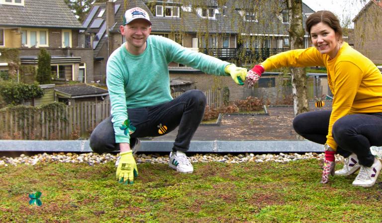 Groene daken – groener met de buren