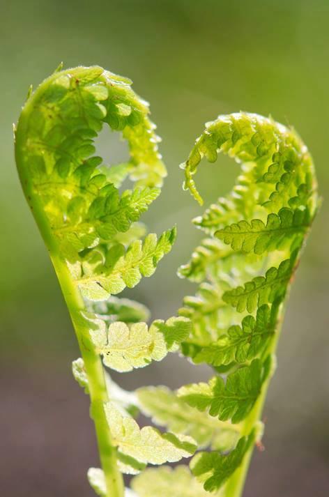 Nieuwe blog op Natuurbloggers: Plantenblindheid
