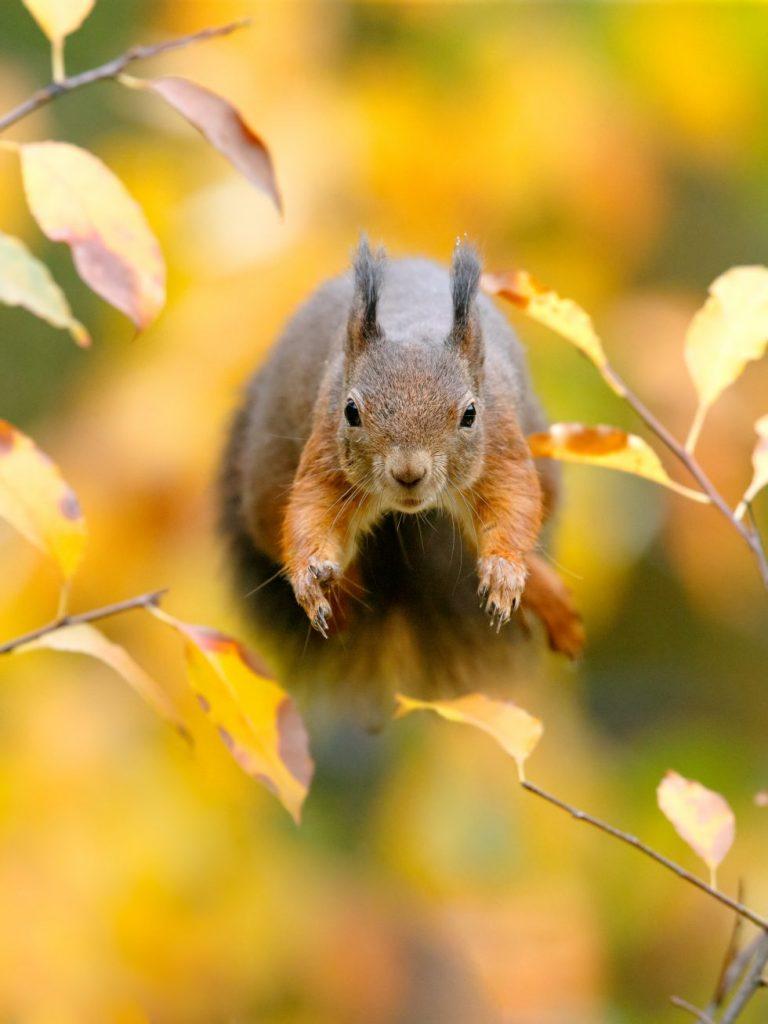 Het verhaal achter de prijswinnende foto: springende eekhoorn