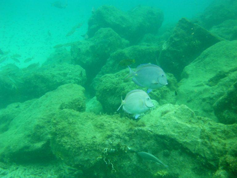 Snorkelen bij Bonaire