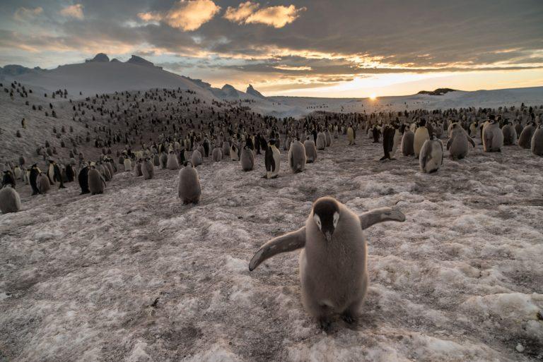 Pinguïns kijken op de Zuidpool, wil ik dat?