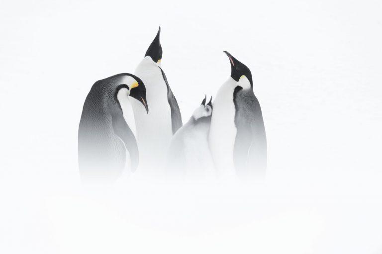 Een droomreis: met Roots naar Antarctica