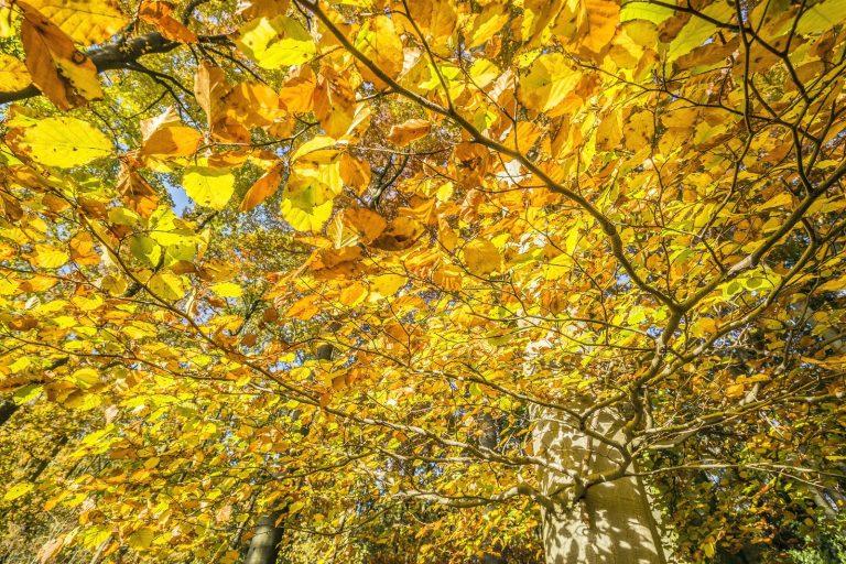 Hoe ontstaan toch die mooie herfstkleuren?