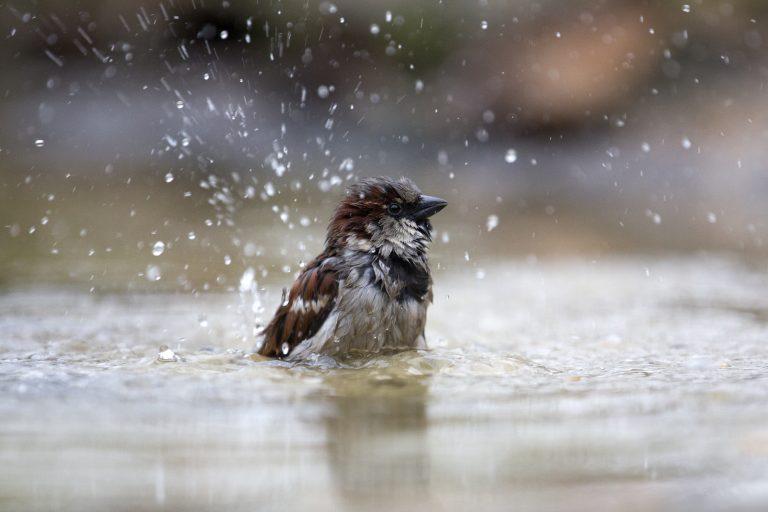 Watertekort voor vogels