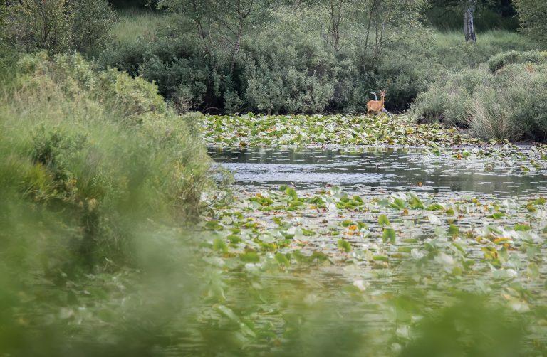 Een oase in de verdorde Meinweg