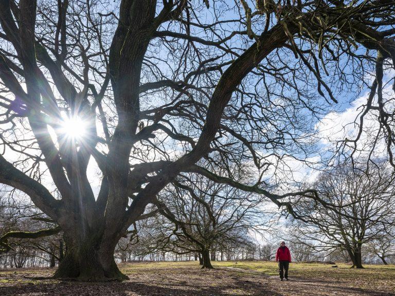 Roots-arrangement: wandelen rond landgoed Mookerheide
