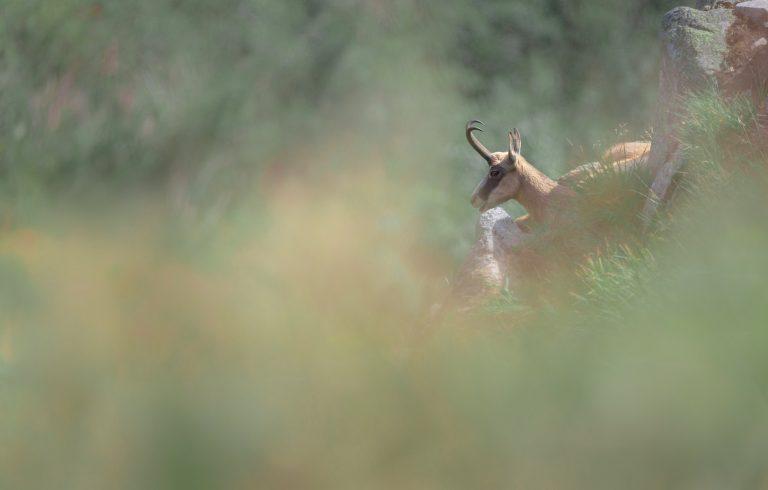 De basis van natuurfotografie: van een kiekje naar een echte foto