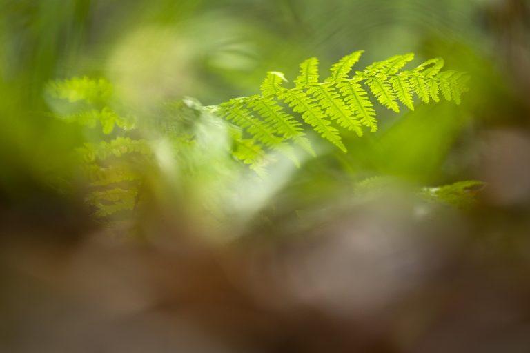 Een koffer vol groene plannen op Duurzame Dinsdag