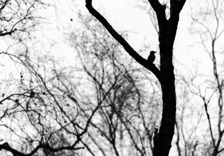 Wat fotografeer je op 'slechtweerdagen?' Contrasten en vormen