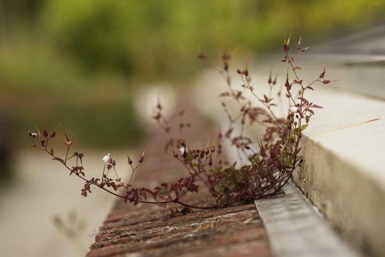 Kleine, stadse stoepplantjes krijgen een naam