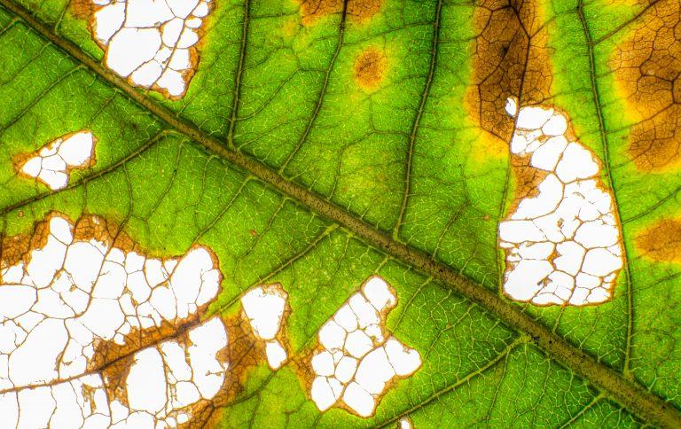 Herfstbladeren fotograferen, dat kan ook thuis!