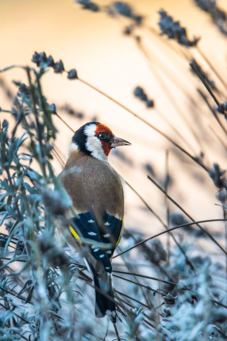 Tuinvogels fotograferen, hoe pak je dat aan?
