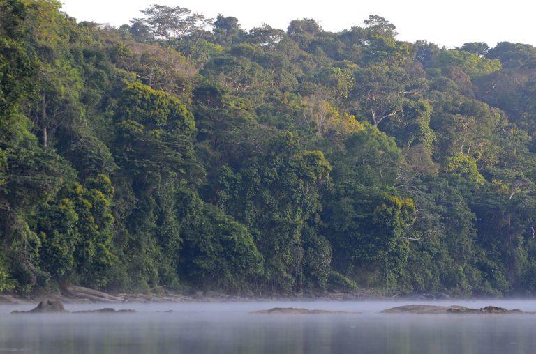 Hoeveel zuurstof maakt een hectare regenwoud per jaar?