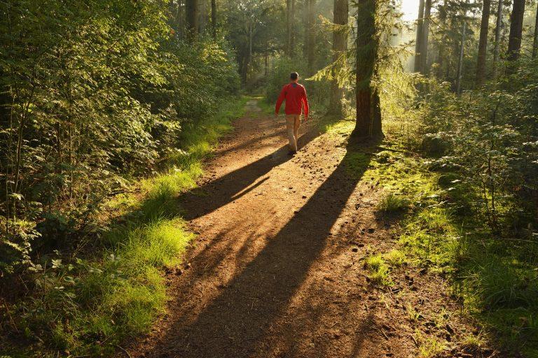 Roots Wandelonderzoek 2021: op hoge wandelschoenen de natuur in