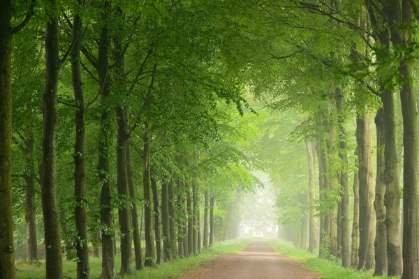 Roots tipt deze route: de verborgen schatten van landgoed Eerde