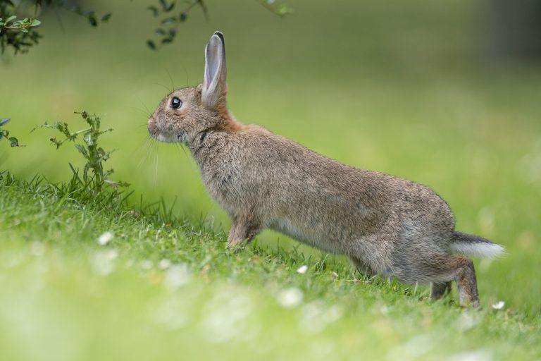 Prachtig portret van een konijn in actie