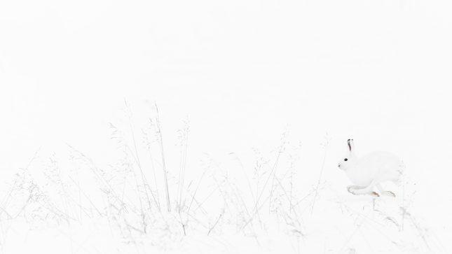 minimalistisch fotograferen