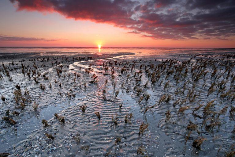 De Wadden winnaar verkiezing Mooiste Natuurgebied van Nederland