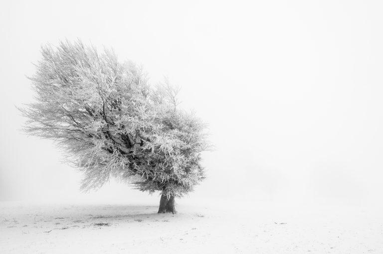 Mist en vorst: een schitterende combinatie