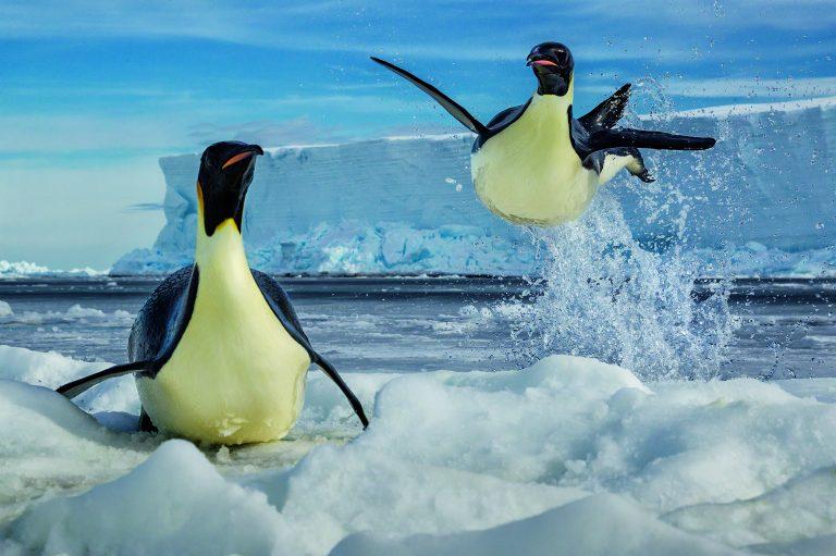 Nieuw boek van topfotograaf Paul Nicklen