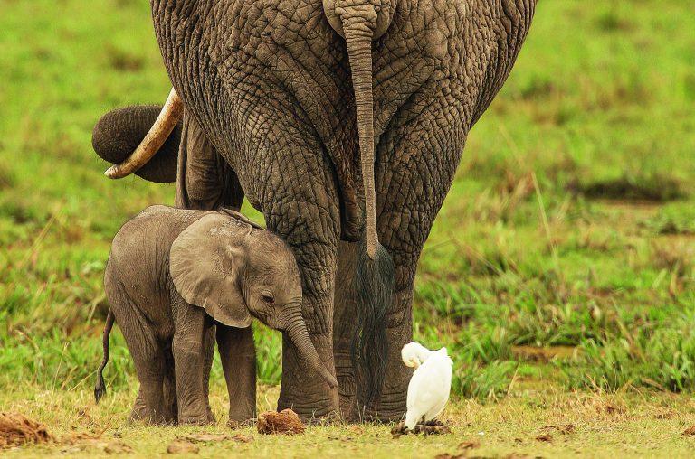 Baby Animals, heerlijk boek vol aaibaarheid
