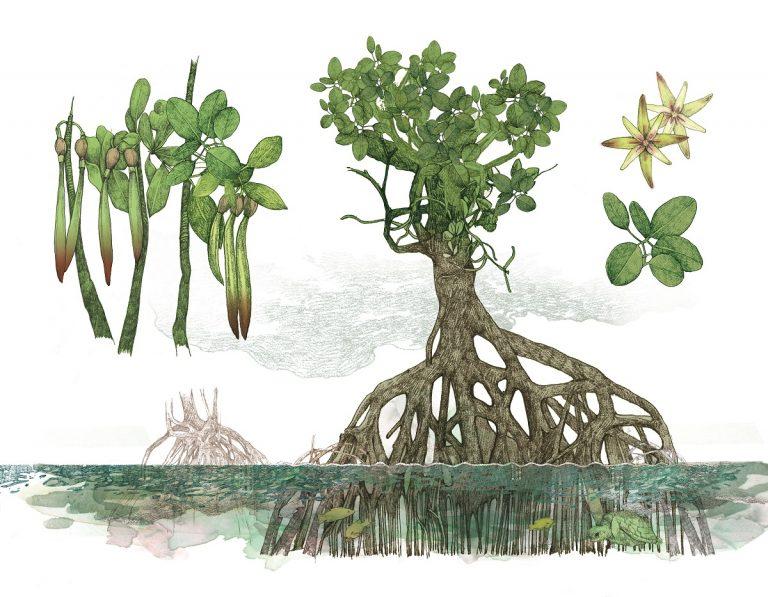 Reis van boom naar boom de wereld over