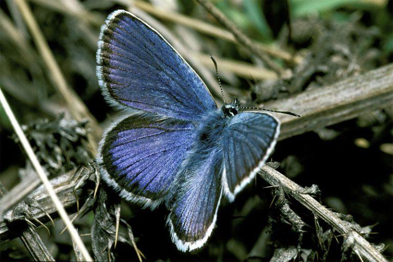 Vluchtelingen in actie voor de vlinders