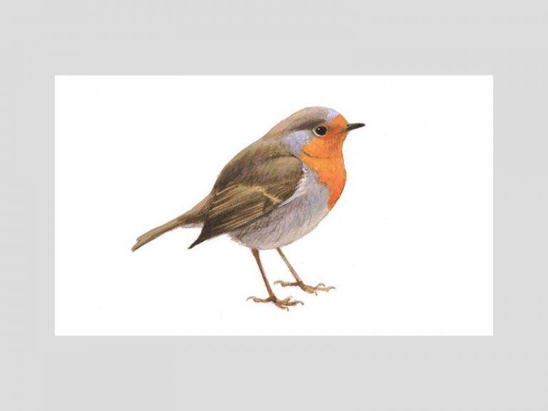 De uitslagen van de Nederlandse tuinvogeltelling