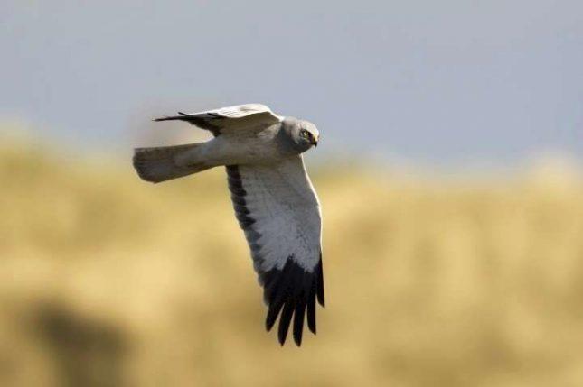 Vogelen voor akkervogels