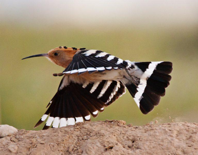 Vogelen voor een goed doel