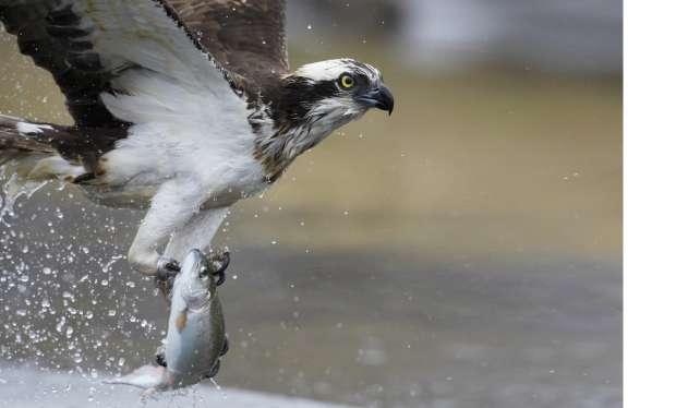 Treinrit door de vogelrijke Biesbosch