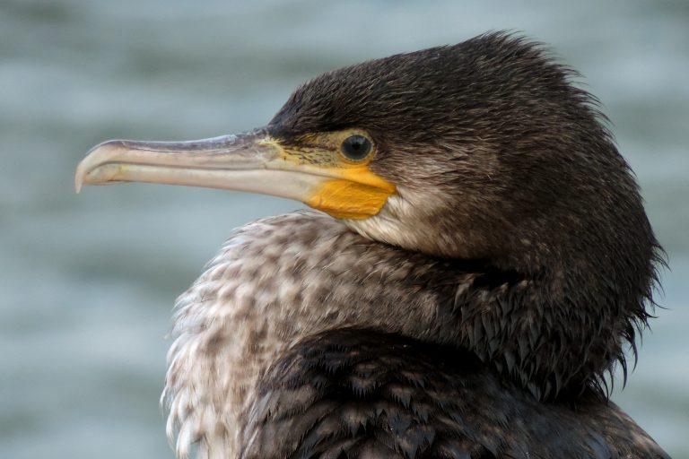 Leuk idee: niet dauwtrappen maar dauwvaren op het Naardermeer