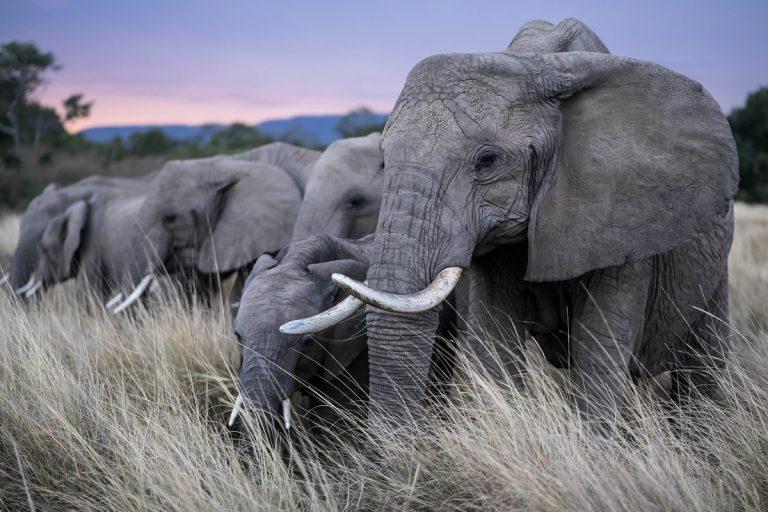 Aantal wilde dieren met 60 procent gedaald sinds 1970