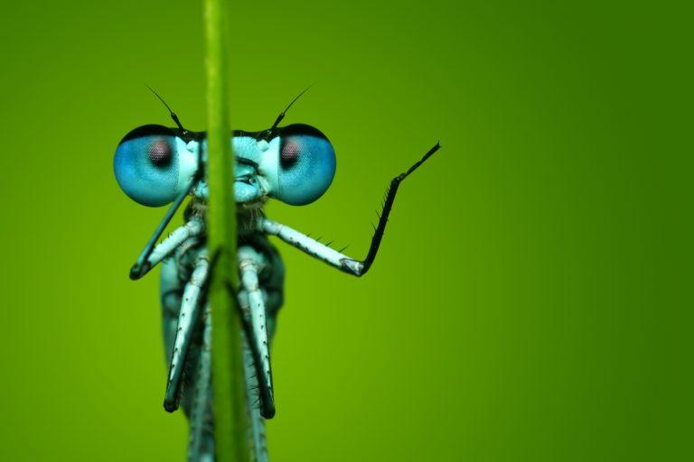 Zien: intieme reizende insectenexpositie – met als doel insecten beter te beschermen