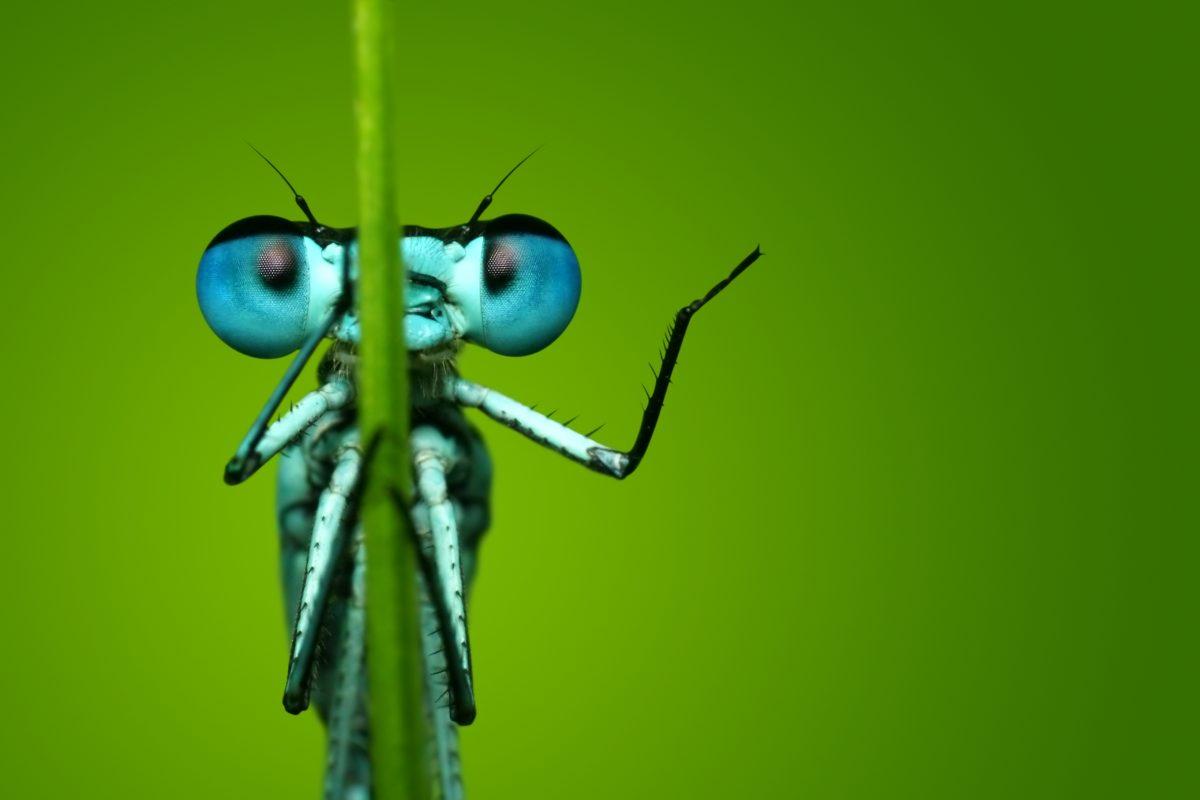 insectenexpositie